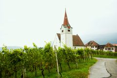 Vine and chapel Stock Photography