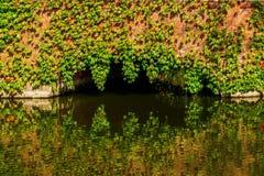 Vine clad bridge over a pond Stock Images