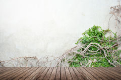 Vine on concrete wall and wood floor. Vine growing on concrete wall and wood floor texture for background stock photography