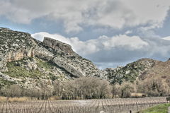Vine in Corbieres, France Stock Images