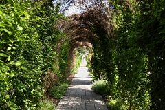 Vine-covered arbor. This arbor is as if a tunnel, covered in vines which will bring forth beautiful blooms, and are still learing out. At the end you can barely Stock Photos