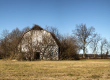 Vine covered barn front Stock Image