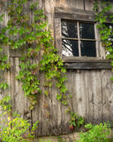 Vine Covered Barn Royalty Free Stock Photos