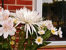 bunch of long stem white flowers on porch Stock Photos