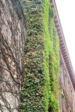 Vine covered brick building Royalty Free Stock Photo