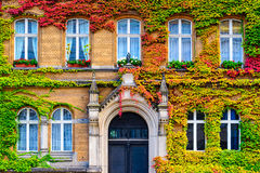 Vine Covered Building Stock Images