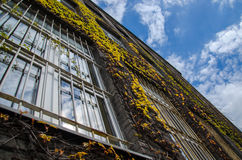 Vine covered historical building with clouds Stock Images