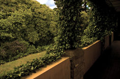 Vine covered patio Royalty Free Stock Photography