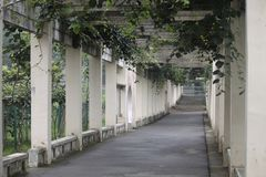 Vine Covered Pillared Walkway Royalty Free Stock Photography