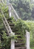 Vine Covered Stairs Royalty Free Stock Image