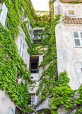 Vine Covered Stone Wall Royalty Free Stock Image
