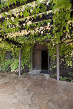 Vine Covered Trellis. A trellis covered with green vines leading to a doorway Royalty Free Stock Photo