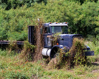 Vine Covered Truck Stock Image