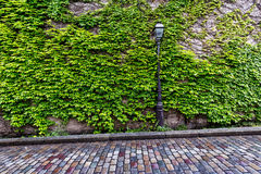 Vine covered wall and cobblestone street Stock Photo