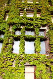 Vine Covered Wall with Windows Royalty Free Stock Photography