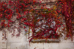 Vine covered window Royalty Free Stock Photos