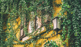 Vine covered window Royalty Free Stock Images