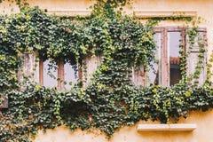 Vine covered window Stock Photos