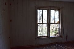 Vine covered windows in abandoned house stock photo
