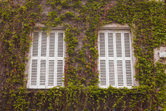 Vine covered windows Stock Photo