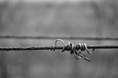 Vine crook on wire. Black and white photo of vine crook on wire Stock Photography