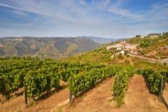 Vine cultures in the Douro region Stock Photo