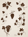 vine för designelementdruva royaltyfri illustrationer