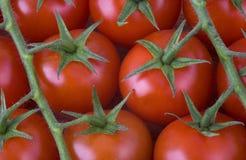 vine för tomater för Cherryred Arkivbilder