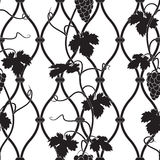 Vine on a fence in black and white Royalty Free Stock Image