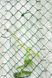 Vine on a fence Stock Photos