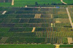 Vine fields. Vineyards on the south of Germany Stock Photos
