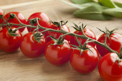 Vine with fresh cherry tomatoes Royalty Free Stock Photo