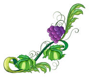 A vine fruit Royalty Free Stock Photos