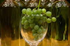 Vine Glass with Grapevine Stock Photo