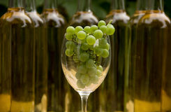 Vine Glass with Grapevine Royalty Free Stock Images