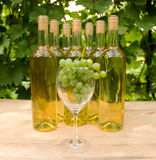 Vine Glass with Grapevine Royalty Free Stock Image