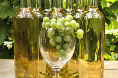 Vine Glass Stock Image