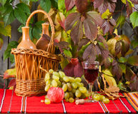 Vine and grape Royalty Free Stock Images