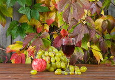 Vine and grape Royalty Free Stock Photos