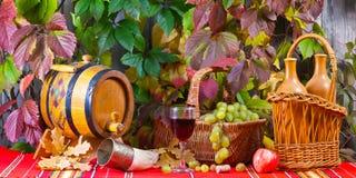 Vine and grape Stock Image