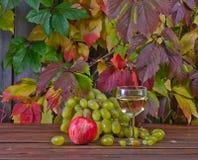 Vine and grape Stock Photos