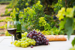 Vine and grape bunches Royalty Free Stock Images