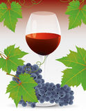 Vine and grape vector Stock Images