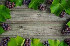 Vine with grapes and leaves around on vintage rustic wooden table, like a frame. Wine making. Background royalty free stock image