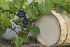 Vine grapes and the wine cask background Royalty Free Stock Photo