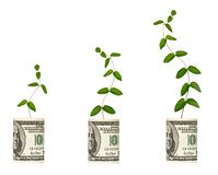 Vine growing from dollar bill stock photo