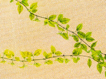 Vine growing on a fabric roof. Background Royalty Free Stock Images