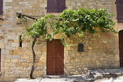 Vine growing over doorway Royalty Free Stock Photos