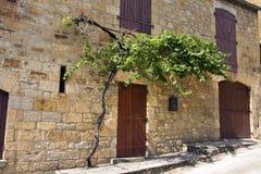 Vine growing over doorway Stock Photo