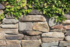 Vine Growing on Stone Wall with Great Rock Formation stock photo
